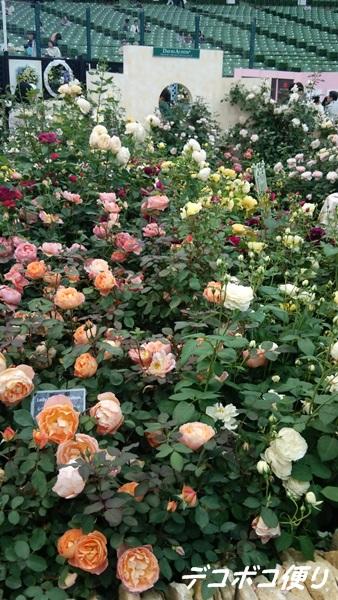 絆という名の薔薇2