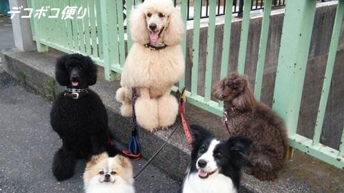 色々とお散歩と愛犬の友♪1