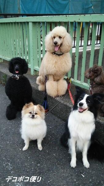 色々とお散歩と愛犬の友♪2