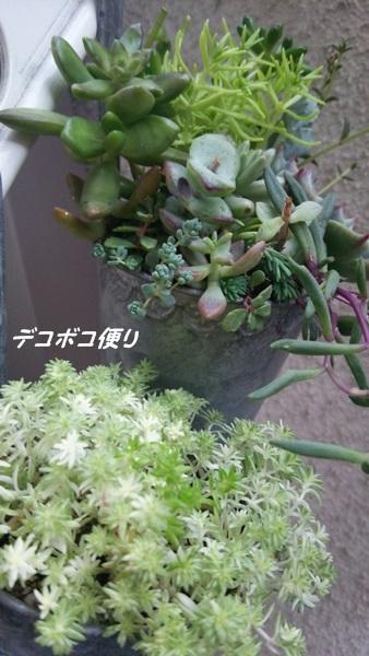 寄せ植えモリモリとワンズ1