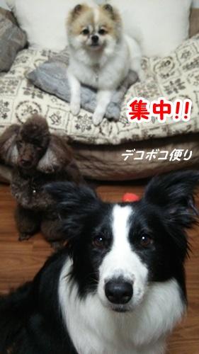 20140724ワンコおやつ10