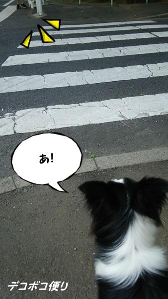 20140731朝散歩3
