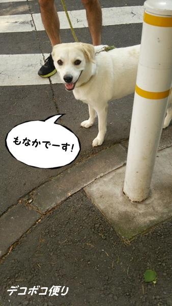 20140731朝散歩4