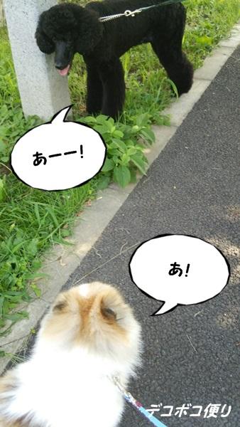 20140731朝散歩6