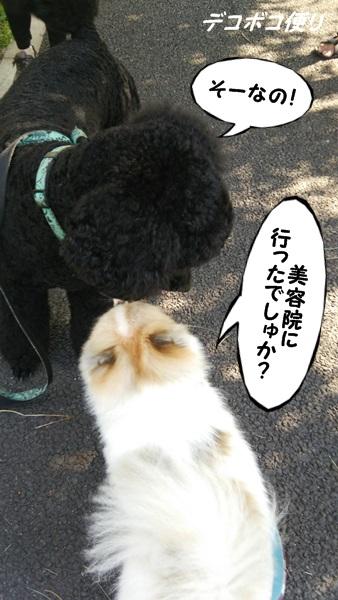 20140731朝散歩9