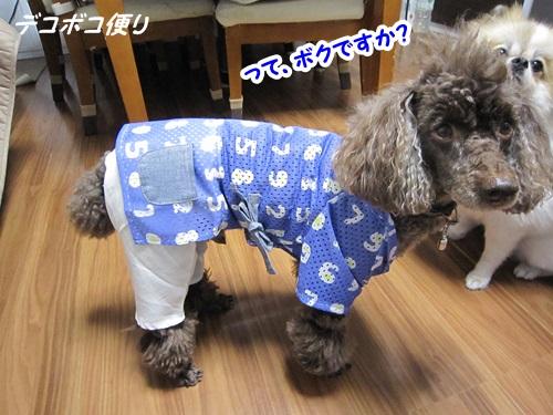 20140828クールTシャツ5