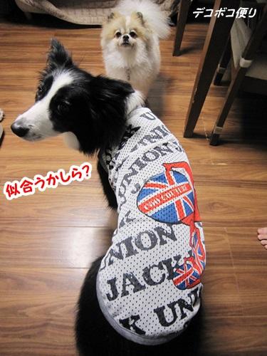 20140828クールTシャツ6
