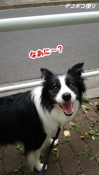 20140909○○ムーン4