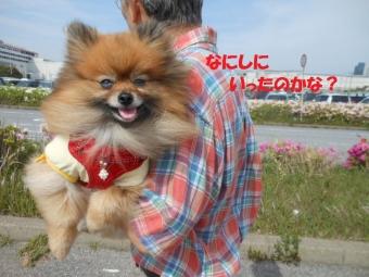 幕張ペット博・太田芝桜 016
