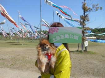 幕張ペット博・太田芝桜 022
