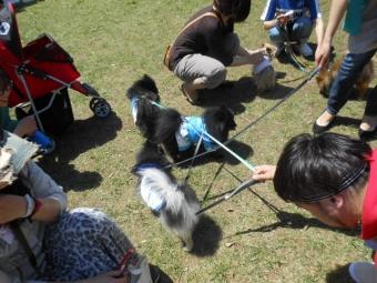 熊猫犬日記オフ会 037