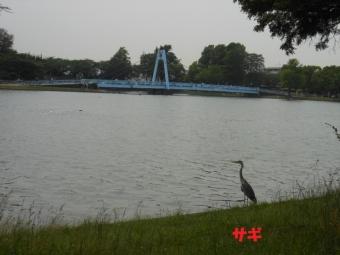 ななのハゲとみさと公園 036
