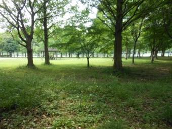 ななのハゲとみさと公園 070