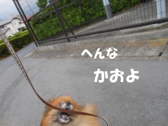 公園散歩 020