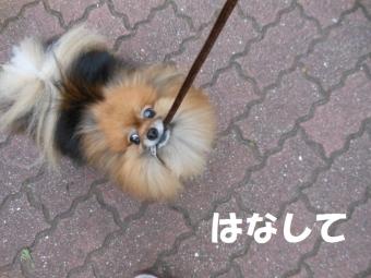 公園散歩 024