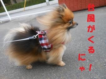 台風接近 1