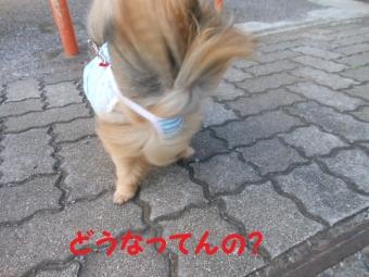 台風11号前のお散歩 001