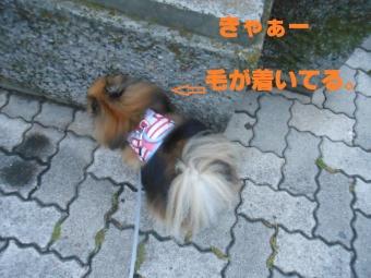 5_20140611213743004.jpg