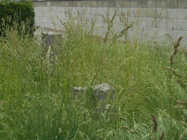 草に埋もれた墓石