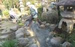蛍の養殖池 in 昭島