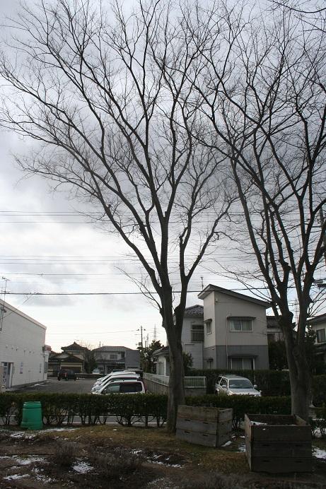 keyaki 20140201 210 20per