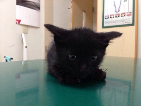 黒猫のくろちゃん