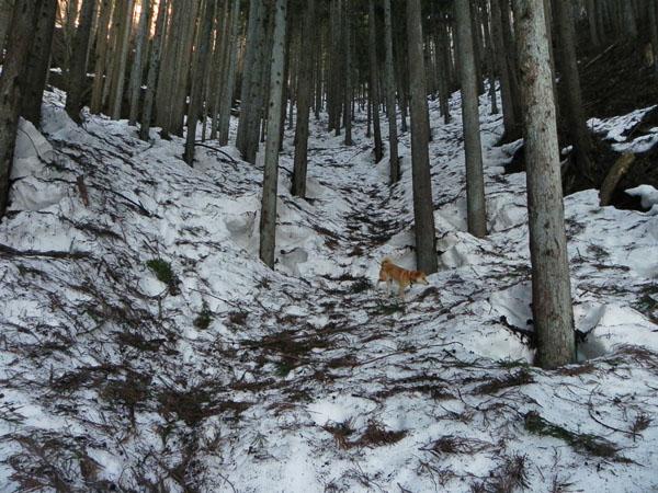 A015-6雪道