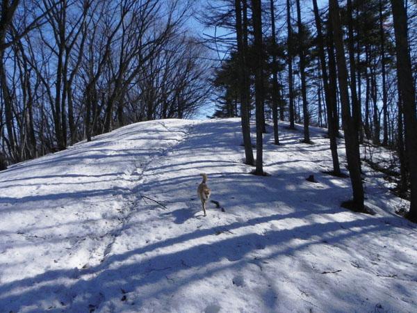 A015-17雪道