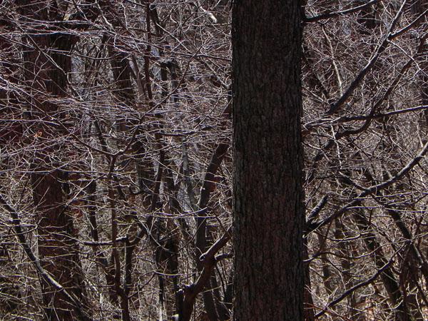 A018-13樹木