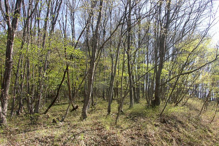 A019-1雑木林