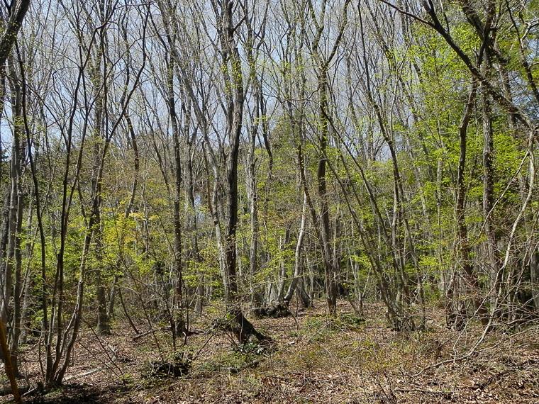 A019-2雑木林