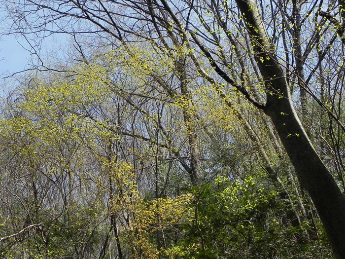 A019-3雑木林