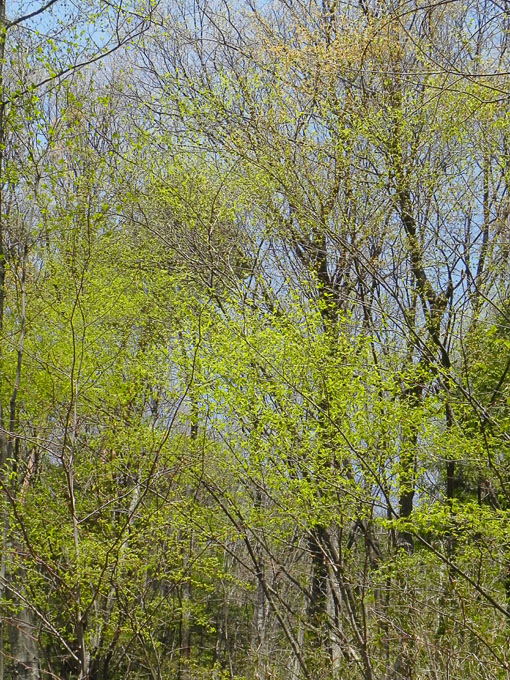 A019-4雑木林