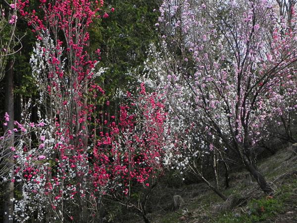 A020-11花盛り
