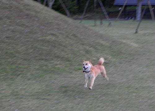 A022-3犬
