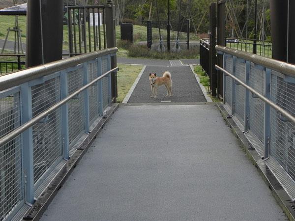 A022-4犬