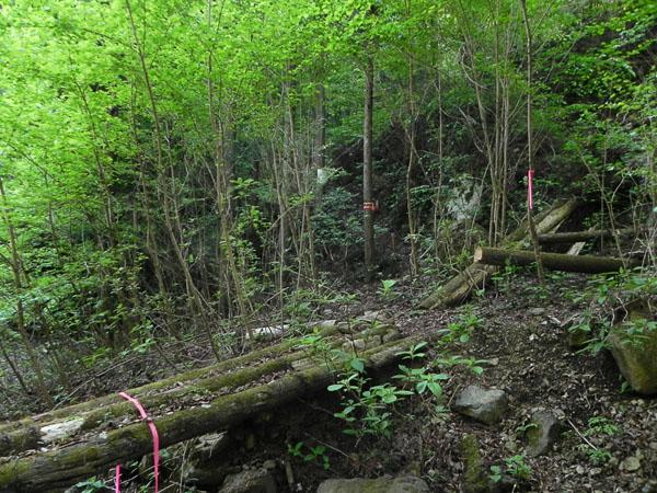 A028-23山道