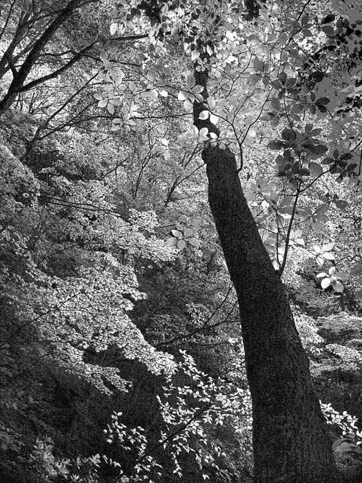 A030樹木