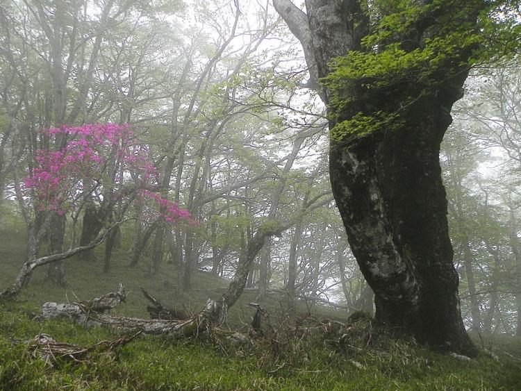 A032-11霧