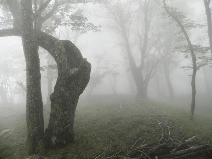 A032-8霧