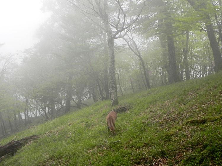 A032-29鹿