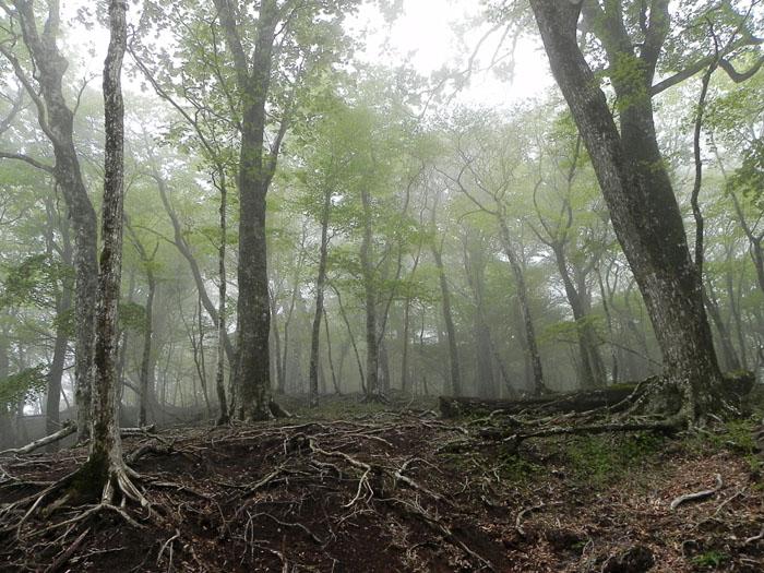 A032-27霧