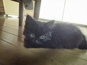 子猫保護 20140715185631