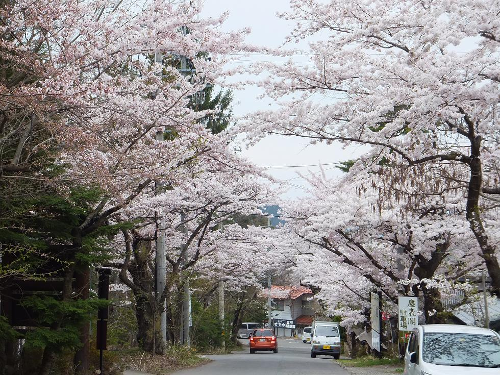 上林温泉の桜並木