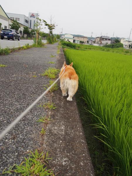 お散歩はじっこ
