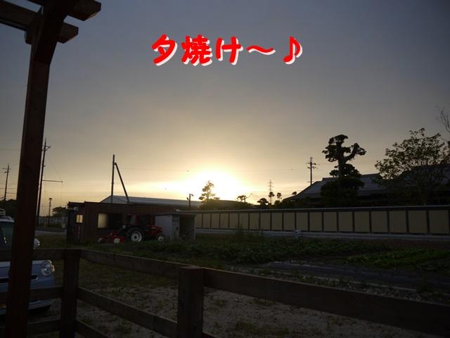 P1040557.jpg