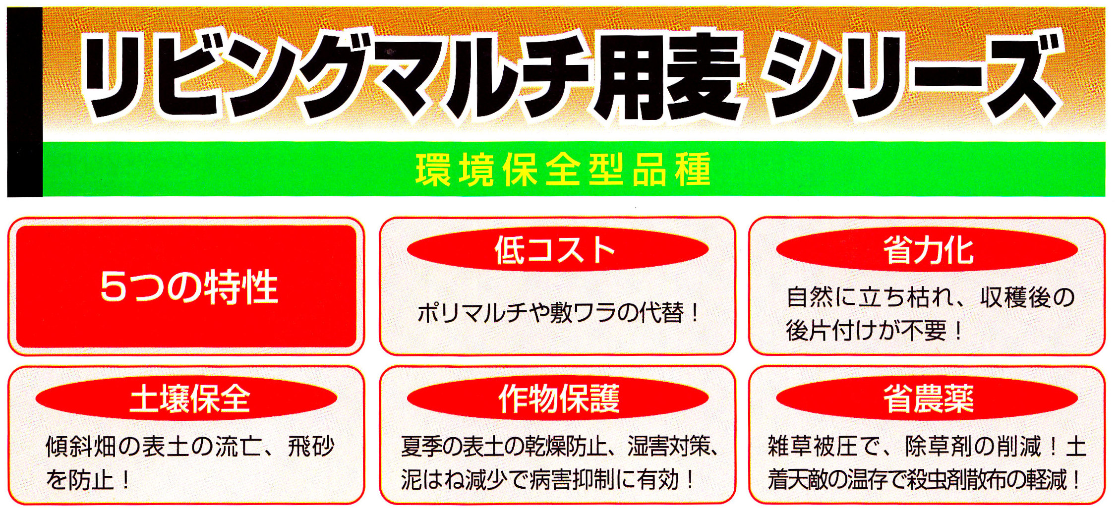 ribing-maruchi-mugi1.jpg