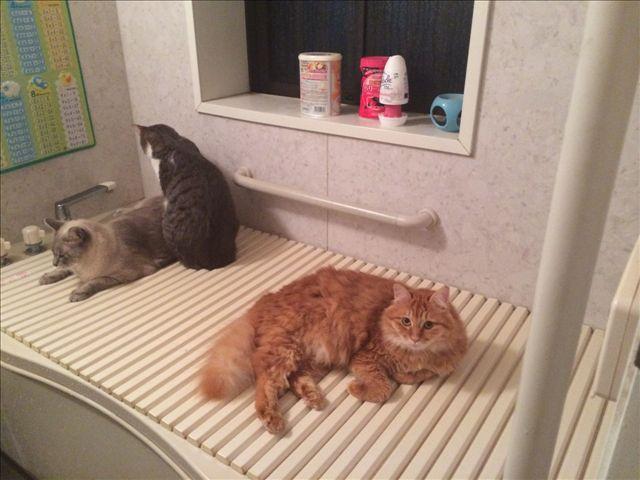 風呂場でにこちゃん