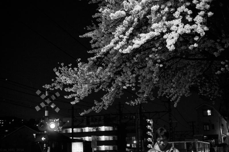 2014-04-07_sakura-01.jpg