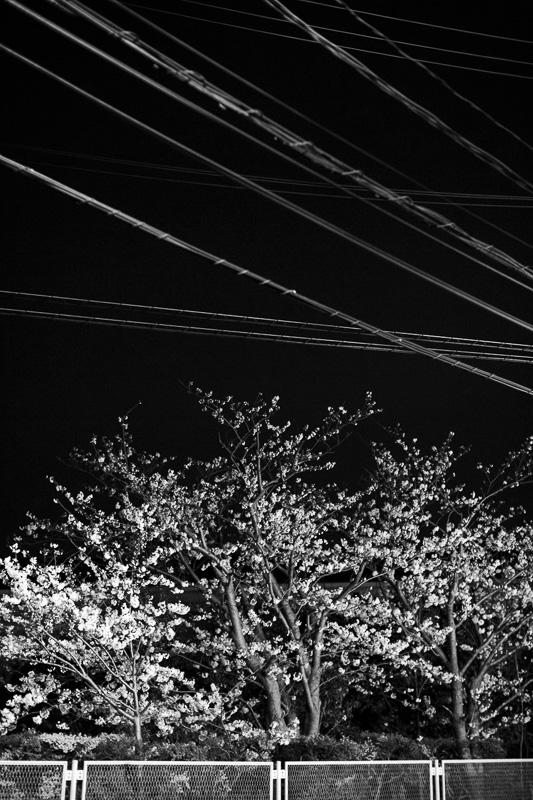 2014-04-07_sakura-03.jpg
